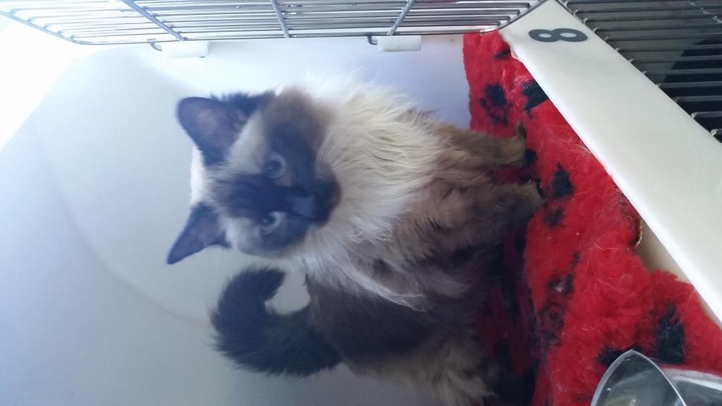 1-transport-pisica-uk-2016-iulie-13
